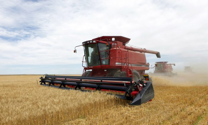 "An article titled ""Government Food Stamp Program To Be Discontinued Effective March 2015"" is nothing more than a hoax. The Supplemental Nutrition Assistance Program (SNAP) program won't be changed. In this July 9, 2009 file photo three combines harvest the winter wheat on the Cooksey farm near Roggen, Colo. Farm-state lawmakers are pushing for final passage of the massive, five-year farm bill as it heads to the House floor Wednesday — member by member, vote by vote. There are goodies scattered through the bill for members from all regions of the country: a boost in money for crop insurance popular in the Midwest; higher cotton and rice subsidies for Southern farmers; renewal of federal land payments for Western states. There are cuts to the food stamp program — $800 million a year, or around 1 percent — for Republicans who say the program is spending too much money, but they are low enough that some Democrats will support them.  (AP Photo/Ed Andrieski, File)"