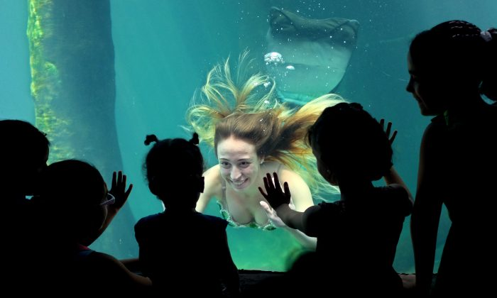 JAN 9: A model performs dressed as a mermaid at the Sao Paulo's aquarium in Sao Paulo, Brazil, Wednesday, Jan. 8, 2014. The presentation runs daily as a special event to attract visitors during the January school vacations.(AP Photo/Andre Penner)