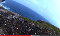 Watch: Bird Steals Camera, Shoots Amazing Video of Penguin Colony