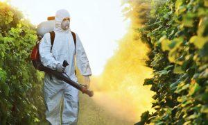 Pesticide DDT Linked to Higher Alzheimer's Risk