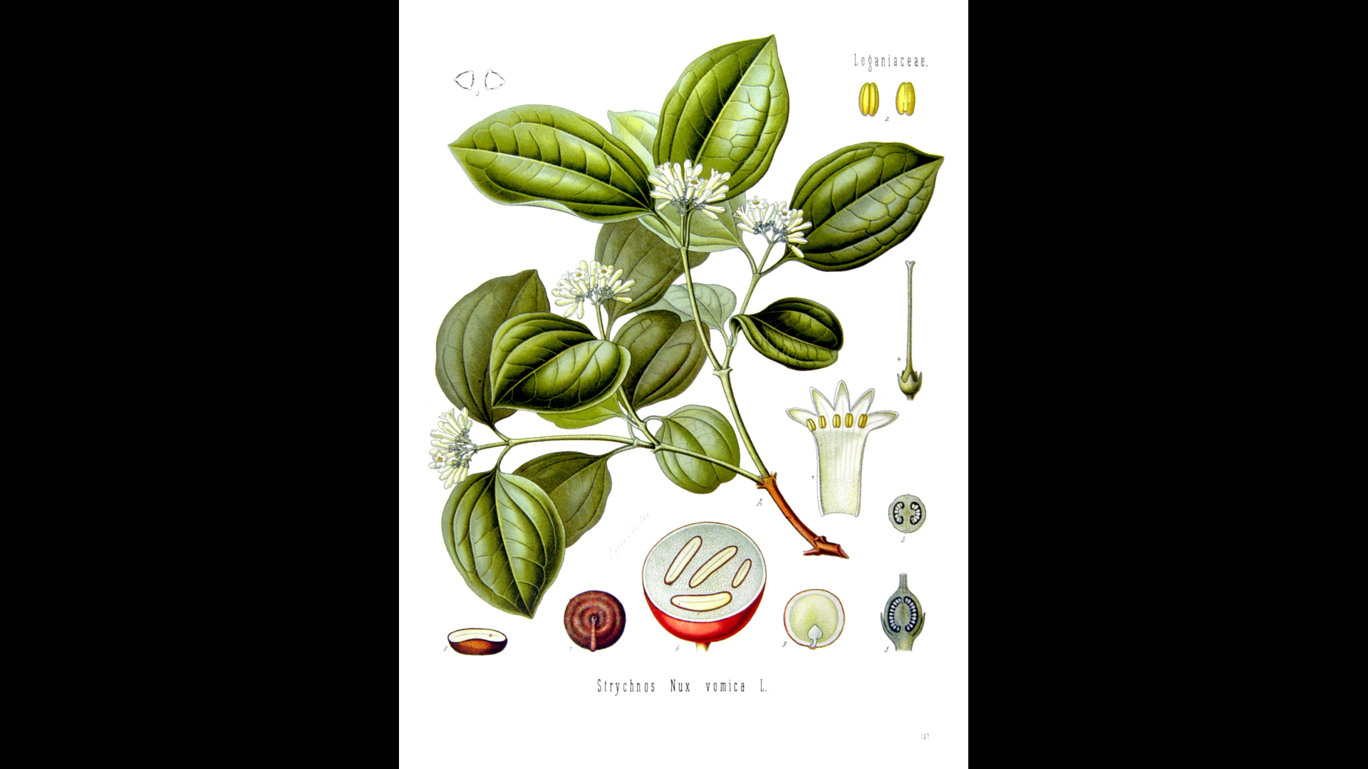 Anecdotes From Homeopathy: Nux Vomica