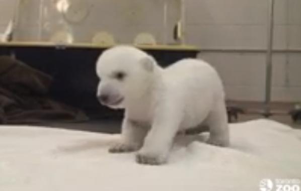(YouTube/Toronto Zoo)