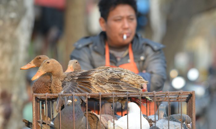A street vendor sells live poultry in Shanghai on Jan. 6. January has seen at least 101 recorded cases of bird flu, causing 10 deaths. (PETER PARKS/AFP/Getty Images)