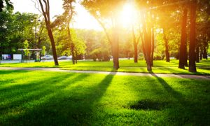 Green Cities Provide a Mental Health Boost That Lasts