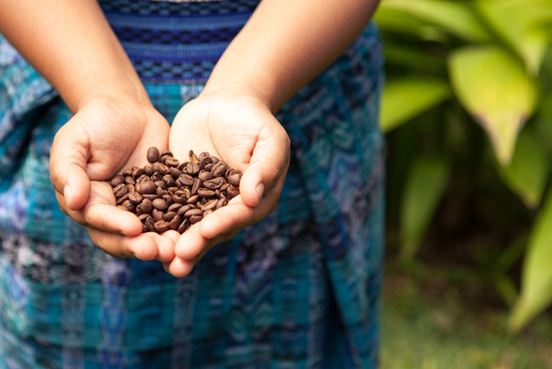 A coffee theme park is set to open in Costa Rica in 2017. (Shutterstock*)