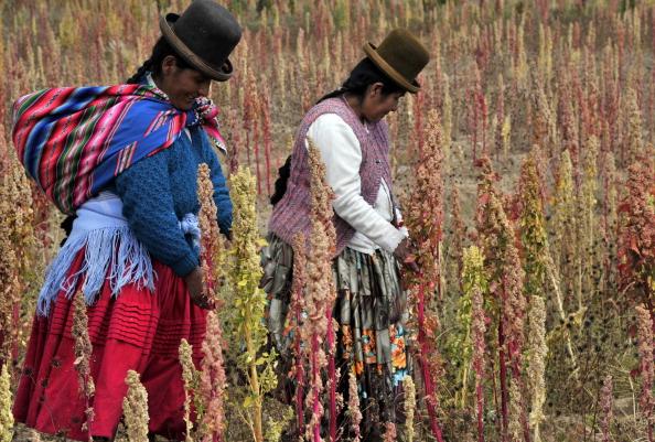 Bolivian Aymara natives walk on a quinoa plantation. (AIZAR RALDES/AFP/Getty Images)