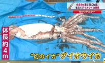 Giant Squid Caught: Japanese Fisherman Says He's Sorry for Messing it Up