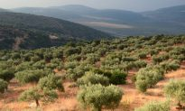 Israel a Hotbed for Agricultural Innovation