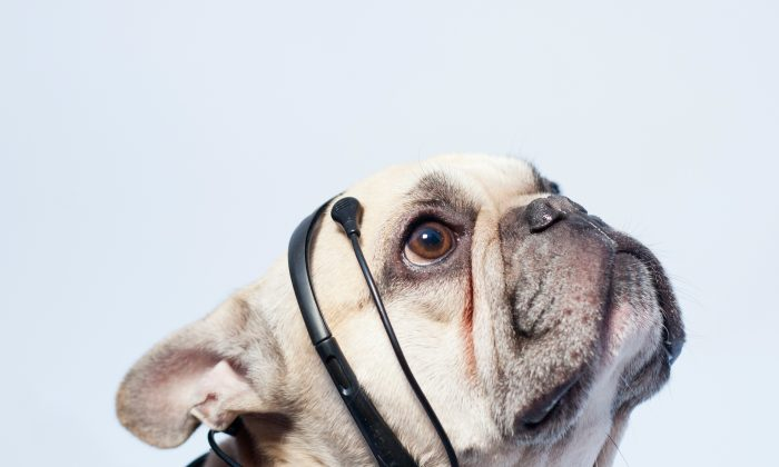 A device that reads certain thought patterns and communicates a dog's thoughts to its owner. (Courtesy of No More Woof)