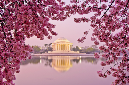 The Jefferson Memorial building in Washington, D.C., during the cherry blossom festival. (Shutterstock*)