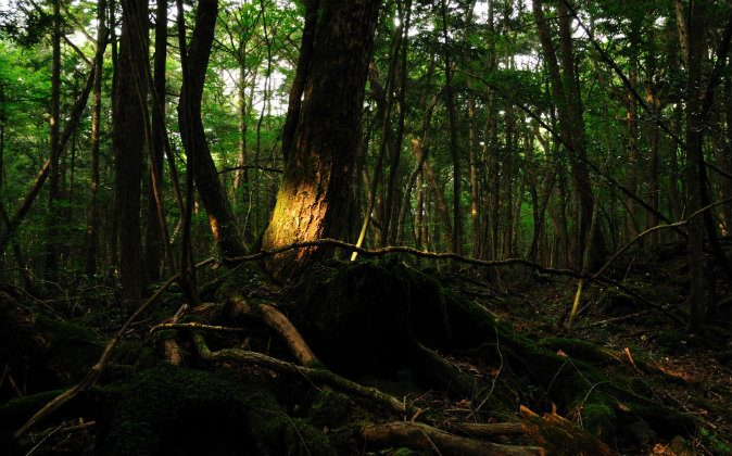 Aokigahara Forest, Japan. (Wikimedia Commons)