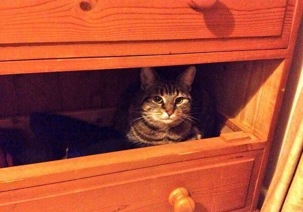 Day 36 #100happydays sorting out clothes, turn my back and look who's crept into snuggle in the jumper drawer! (via @rhiannonbates)