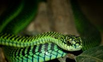 9 Deadliest Snakes in the World