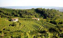Prosecco, Italy's Sparkling Gem