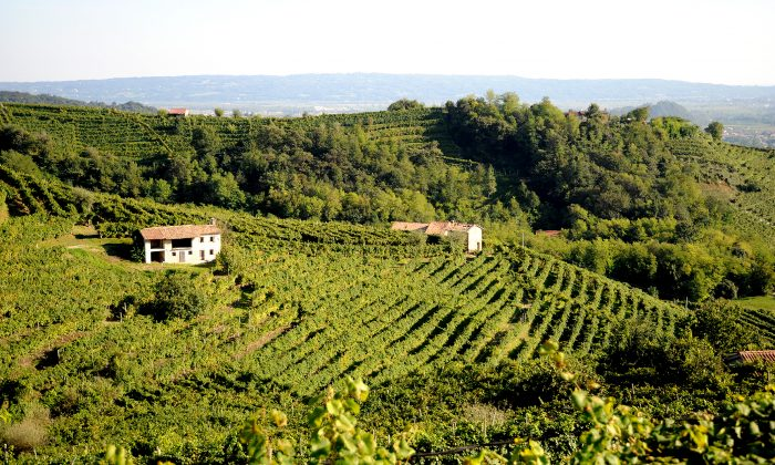 Cartizze Hill Vineyard. (Courtesy of Mionetto USA)