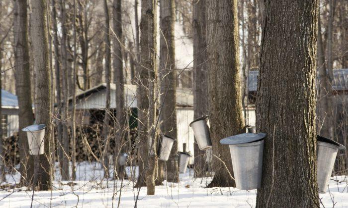 A traditional sugar shack in Quebec. (Josiane Farand/Photos.com)