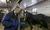 NYC Horse-Drawn Carriages May Come to an End