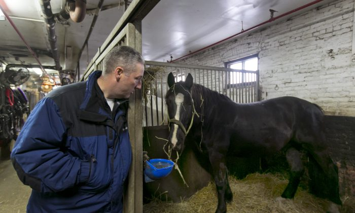 Carriage horse owner Stephen Malone looks in on his horse Tucker in his stall at New York's Clinton Stables, Jan. 28, 2014. Time may be running out for the iconic horse carriages that carry tourists around New York City's Central Park. New York City Mayor Bill de Blasio has already declared his intention to shut down the industry, saying it is inhumane to keep horses in modern-day Manhattan. (AP Photo/Richard Drew)