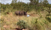 This Is What Poaching Looks Like (Graphic Video); It Can Be Stopped