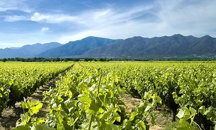 A vineyard in Roussillon. The grape-growing area is bordered by the Mediterranean in the East and mountains in the west. (Manos Angelakis)
