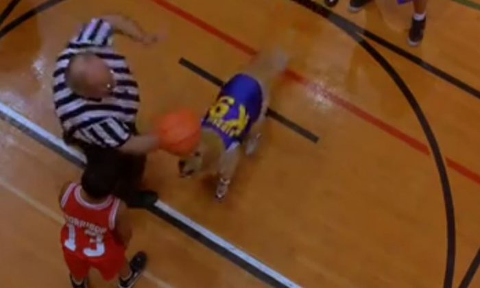 A YouTube screenshot shows Air Bud in the movie of the same name