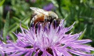 Pesticides Linked to Bee Collapse Now Blamed for Bird Declines