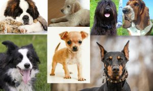 Dog Breeds: What Does Your Choice of Breed Say About You?