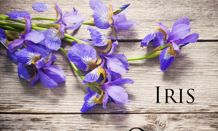 Iris symbolizes eloquence. Purple iris is symbolic of wisdom and compliments. (*Shutterstock)