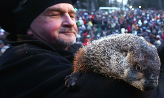 Groundhog Day 2014: When to Watch, Predictions, Accuracy
