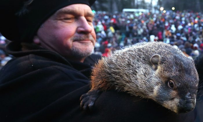 Groundhog co-handler John Griffiths holds Punxsutawney Phil after Phil did not see his shadow and predicting an early spring during the 127th Groundhog Day Celebration at Gobbler's Knob in Punxsutawney, Penn., on Feb. 2, 2013. (Alex Wong/Getty Images)