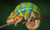 9 Fascinating Creatures Unique to Madagascar
