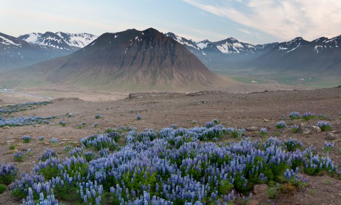 Huge mountains in Iceland in wonderful light. (*Shutterstock)