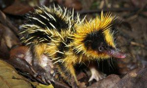21 Strangest, Weirdest, Ugliest, Creepiest Animals in the World