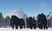 Did a Comet Kill the Woolly Mammoths?