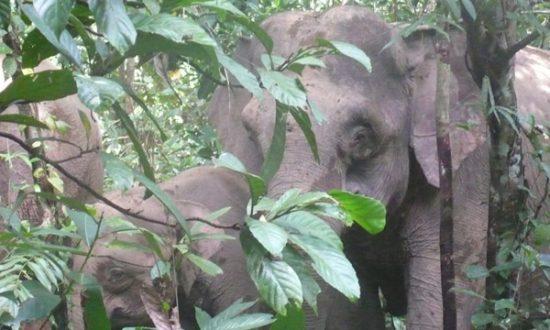 Next Big Idea in Forest Conservation? Privatizing Conservation Management