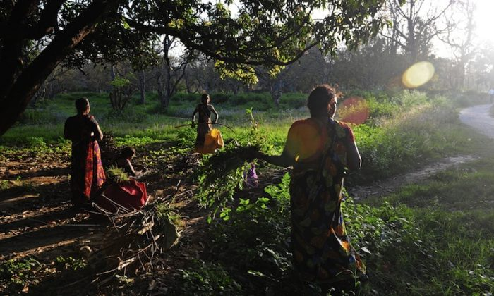 """Indian women collect firewood at an estate in the northeastern city of Allahabad, March 20. In her memoir, """"Shadows in the Sun,"""" Gayathri Ramprasad reveals layers of stigma regarding mental illness present in Indian society.(Sanjay Kanojia/AFP/Getty Images)"""