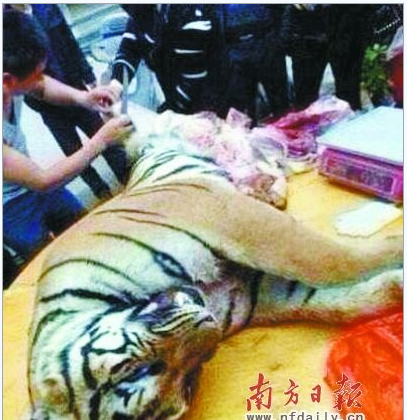 A dead tiger being butchered in China. (Screenshot/Sina News)