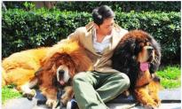 Tibetan Mastiff Sells for Nearly $2 Million in China