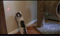 Watch: Cutest Kitten You'll See All Day Tries to Catch Laser Dot