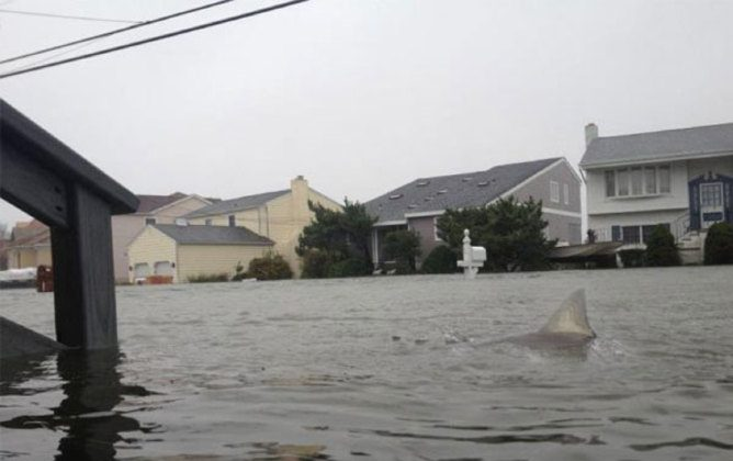 Shark in flood waters after Hurricane Sandy (The Conversation)