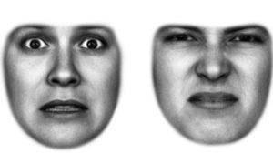 Faces Show Fear and Disgust to Help Eyes See