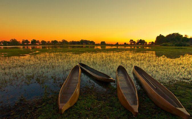 Okavango Delta, Botswana, Africa. (Shutterstock*)