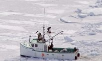 Animal Rights Groups Slam Seal Hunt Bill