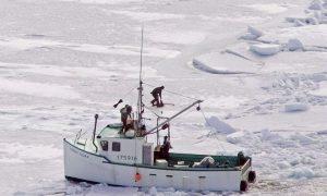 Animal Rights Groups Slam Seal Hunt Bill
