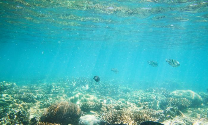 Sydney city harbour underwater scenery. (*Shutterstock)