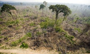 Drought and Fire Push Amazon Forests to Tipping Point