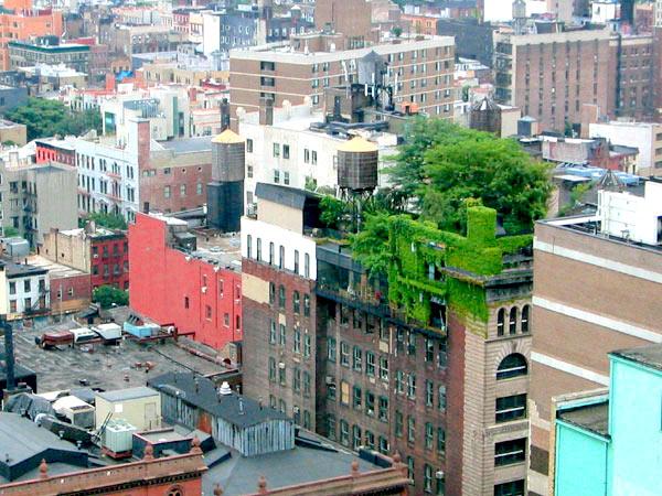 Urban Green Roof