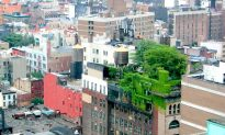 Life Finds a Way: The Surprising Biodiversity of Cities