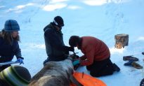 First Nations Project Aims to Save Disappearing Caribou