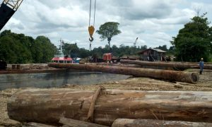 Forests in Indonesia's Concession Areas Being Rapidly Destroyed